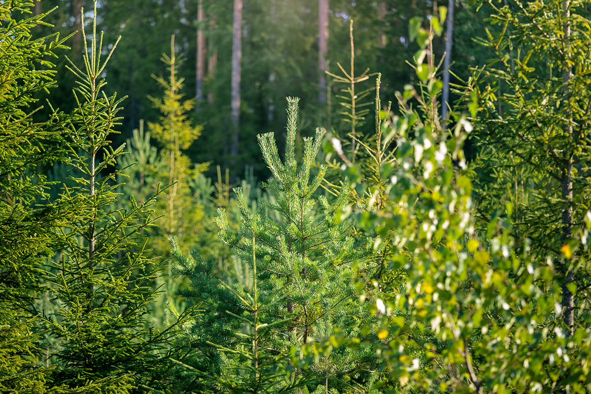 Want to make forestry sustainable? Look to the Nordics