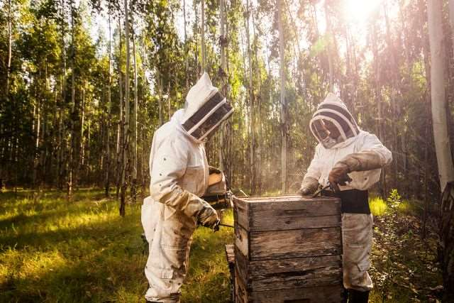 Sustainable beekeeping is the future of honey production