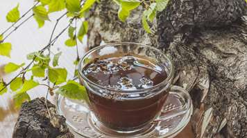 Chaga – The next superfood could be from Finland's forests